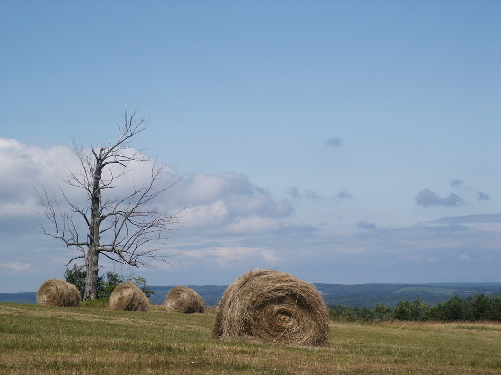 Photo: Haybales