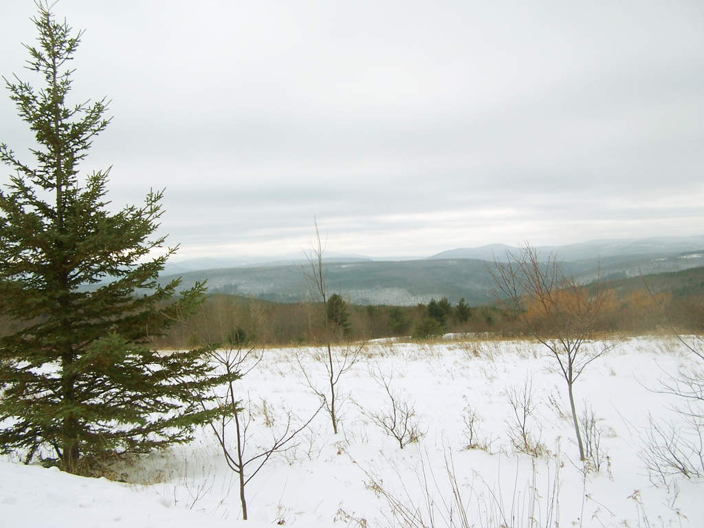Photo: Wintery View Off Of Scutt Road