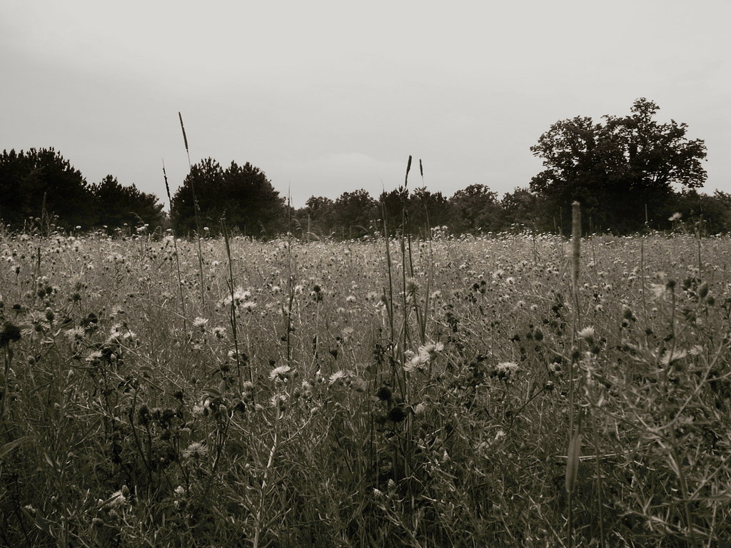 Photo: In A Field
