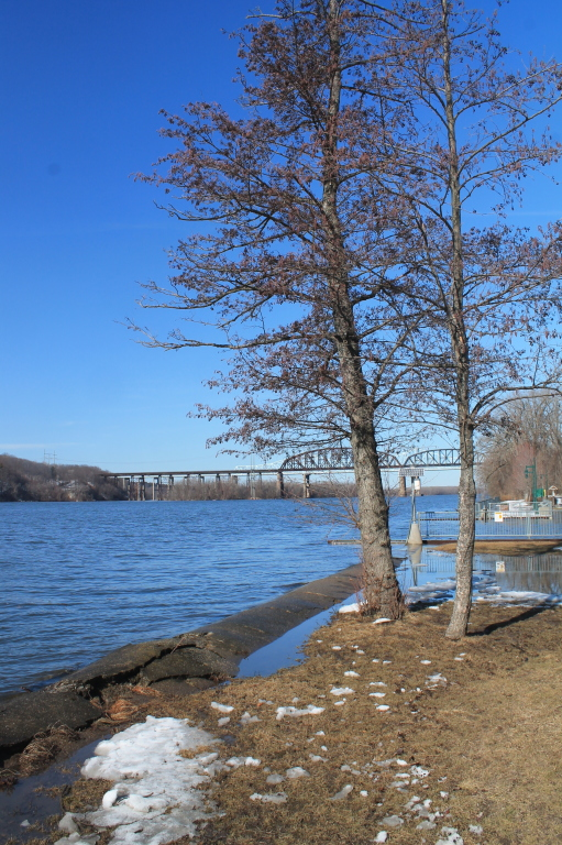 Photo: Trees and Alfred Smith Bridge