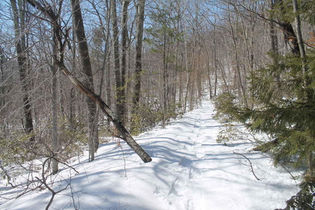 Photo: Great Snow Shoeing at Palenville Overlook Trail