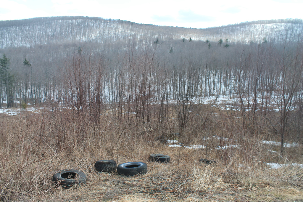 Photo: Tires Suck to Get Rid Off, But Don't Dump Them in State Forest.