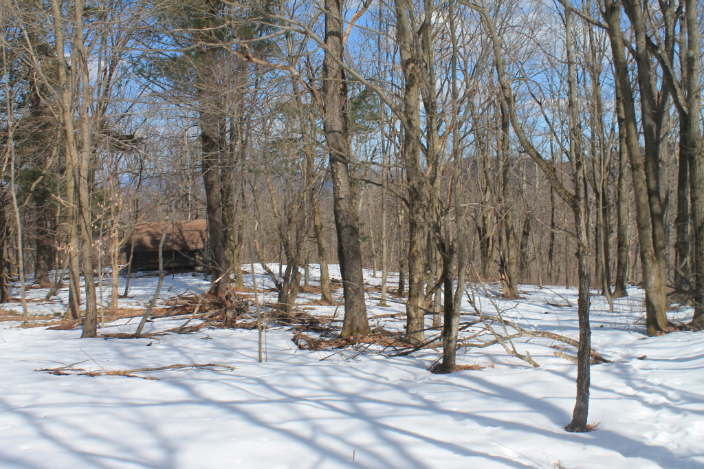 Photos: Harvey Mountain State Forest (Mar 30, 2013, Part B)