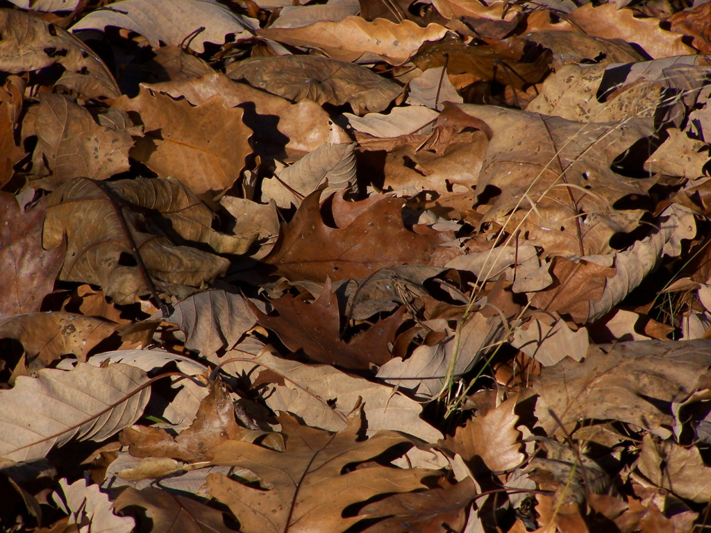 Photo: Fresh Leaf Litter