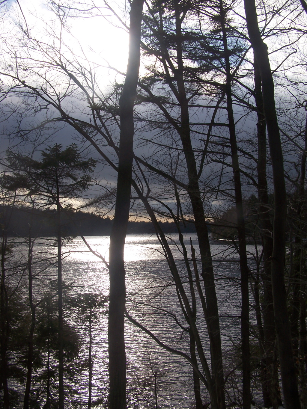 Photo: Long Pond Through the Trees