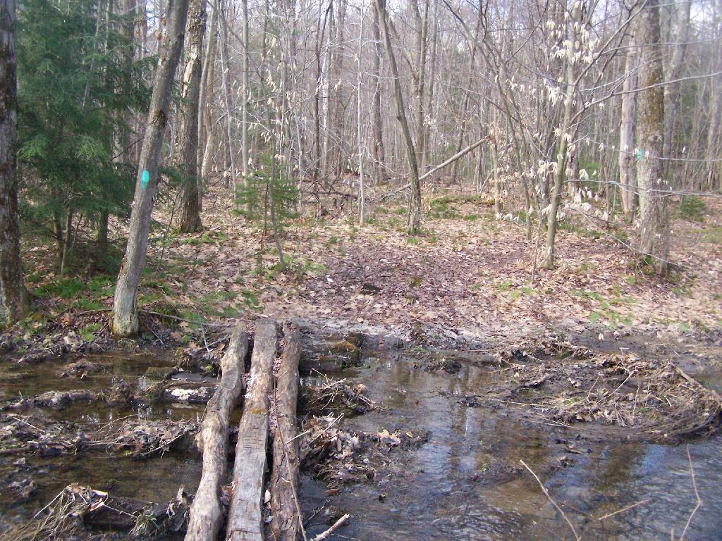 Photo: Log Bridge Across Crick