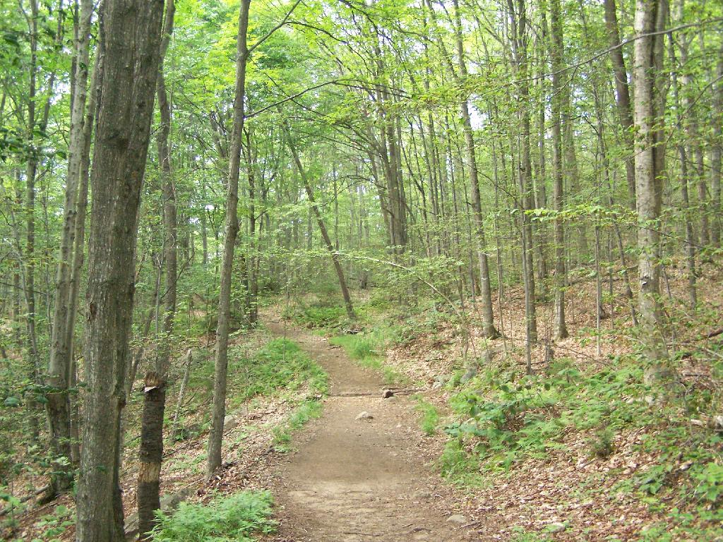 Photo: Trail Follows Old Woods Road