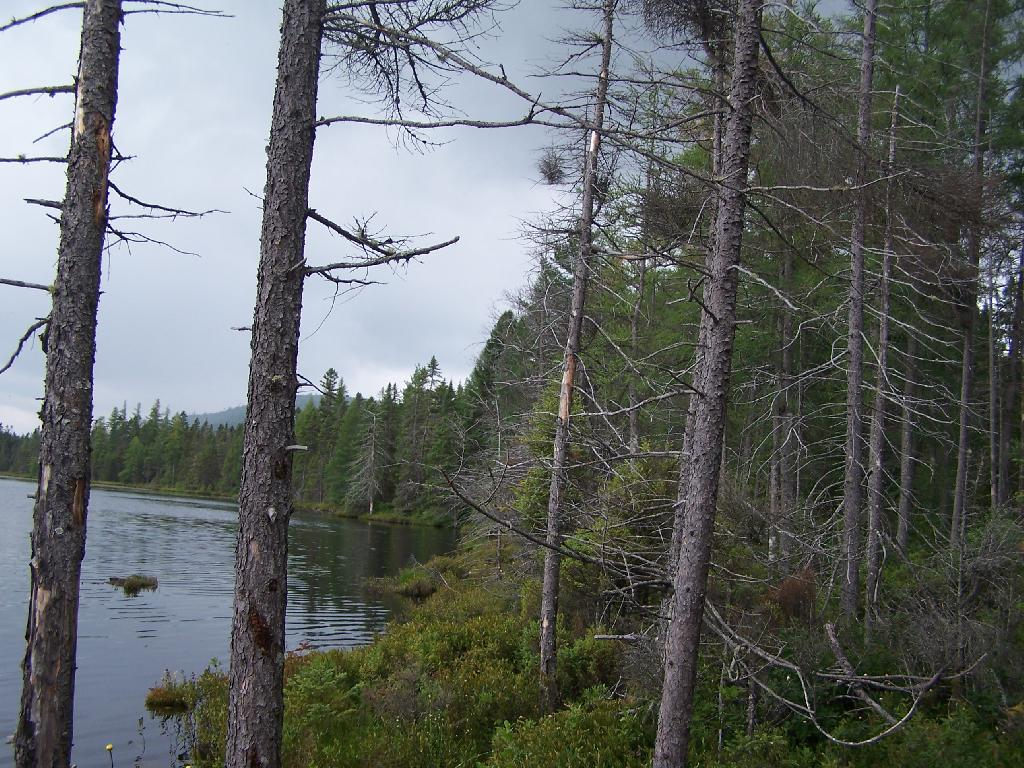Photo: Edge of Helldiver Pond