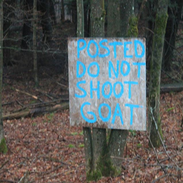 Photo: Posted. Do Not Shoot the Goat.