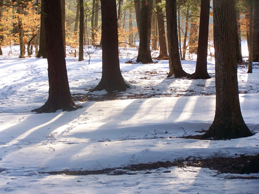 Photo: Snow Drifts in Woods