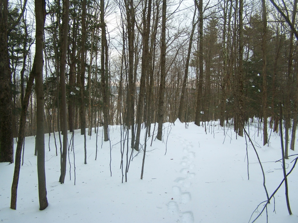 Photo: Snowshoeing Through Deep Snow