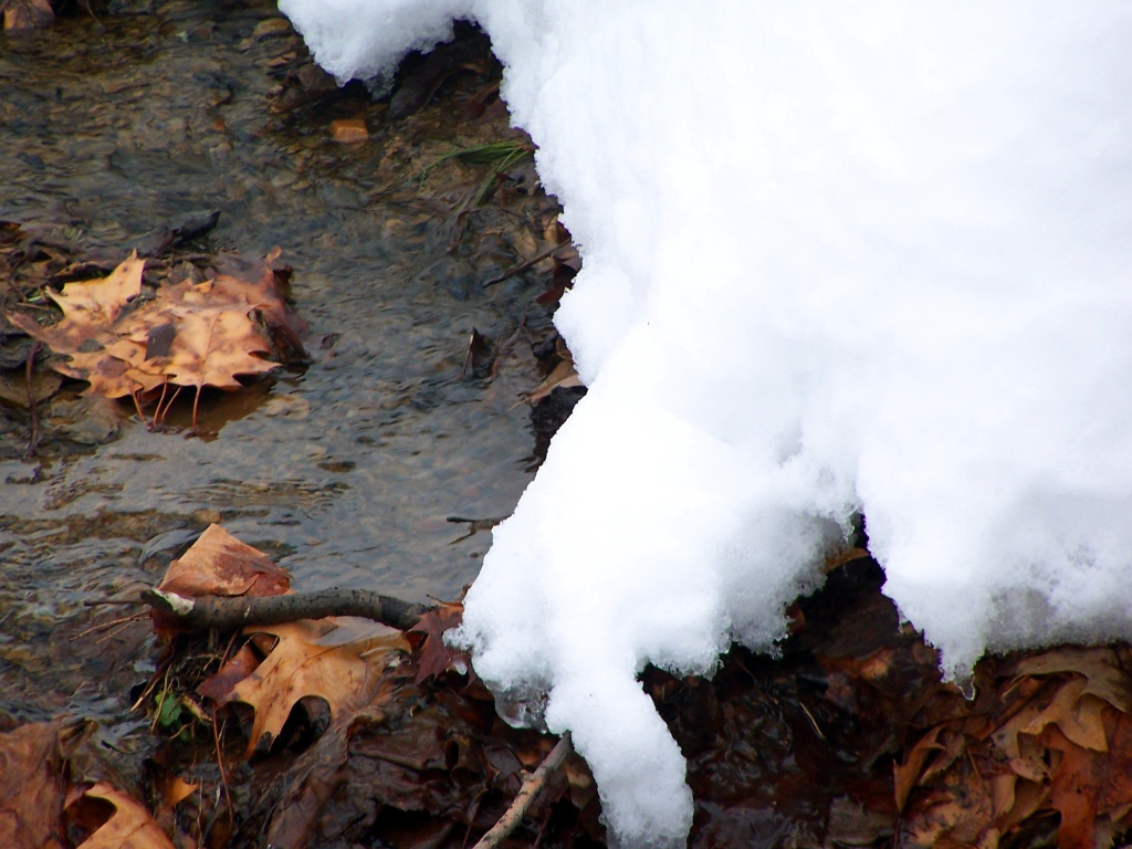Photo: Watching the Snow Melt
