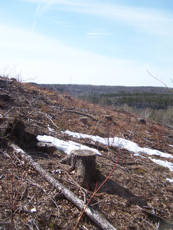 Photo: West Across the Clear Cut