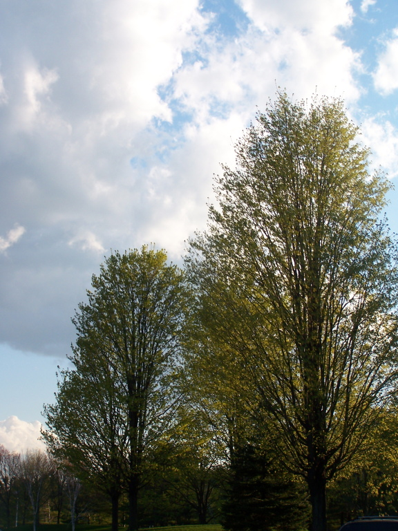 Photo: Trees Starting to Green Up