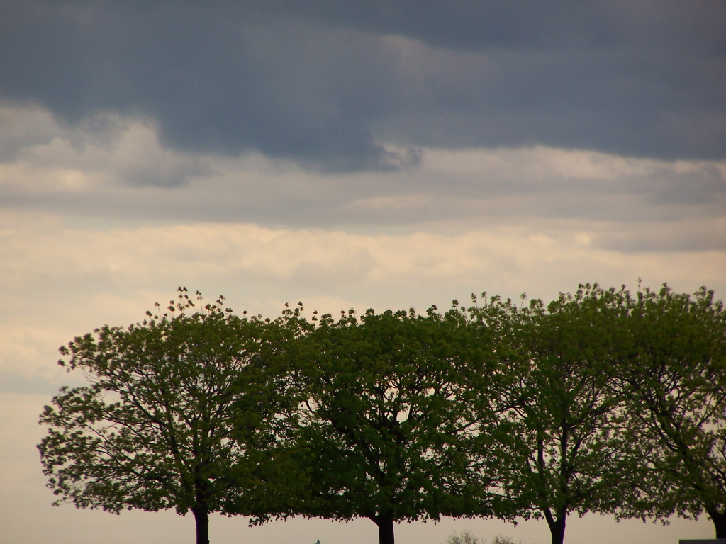 Photo: Line of Trees