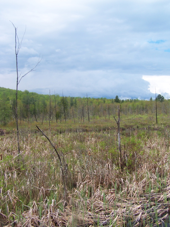 Photo: North Across Moxham Swamp