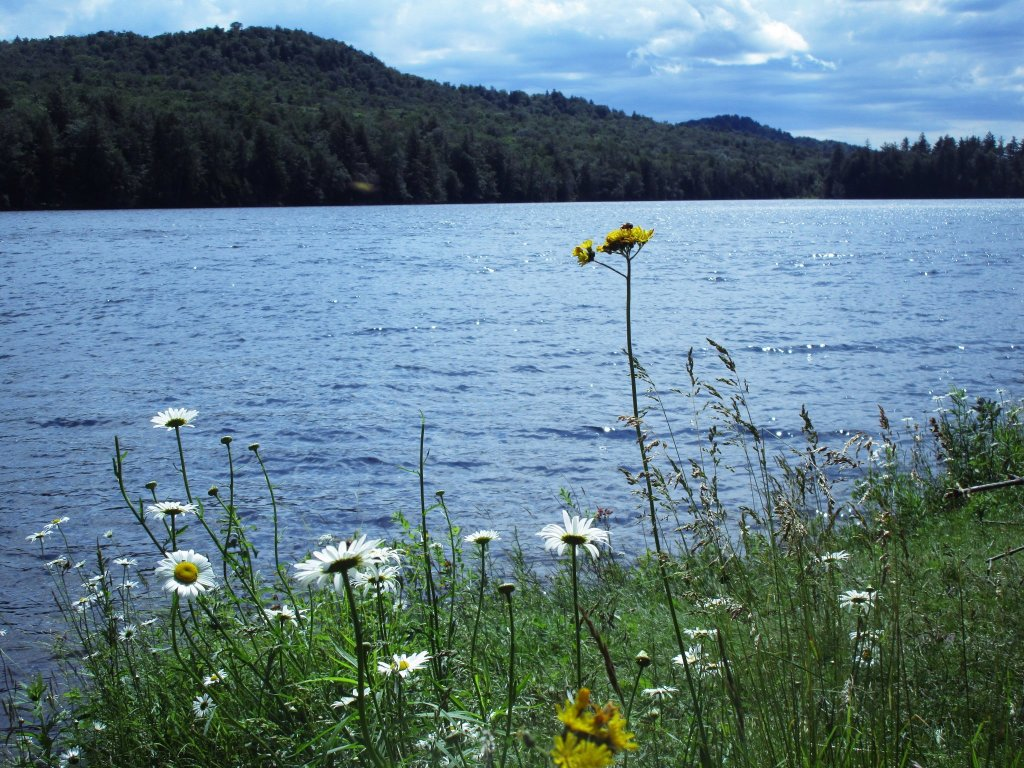 Photo: Wildflowers Along Cascade Lake