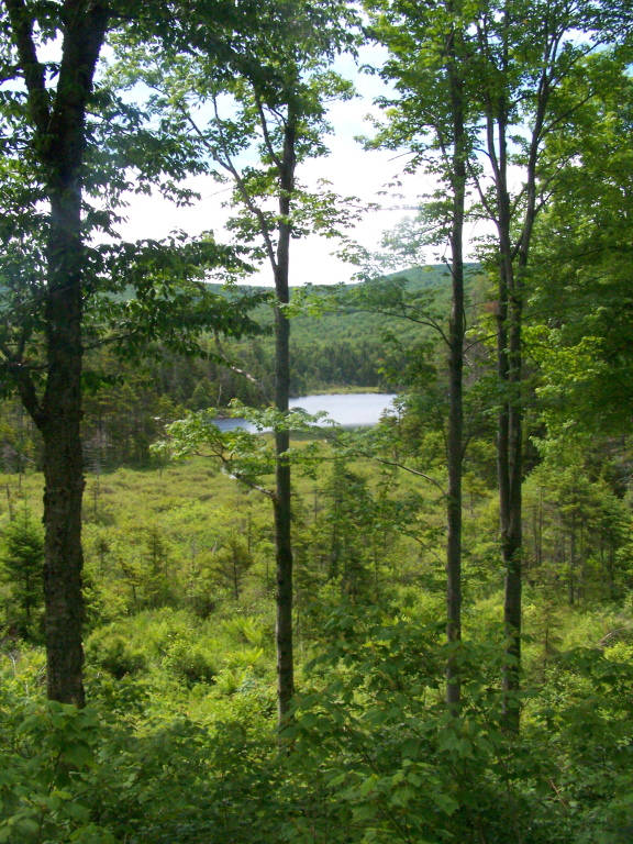 Photo: Beebe Pond as Seen from Kelly Stand Road