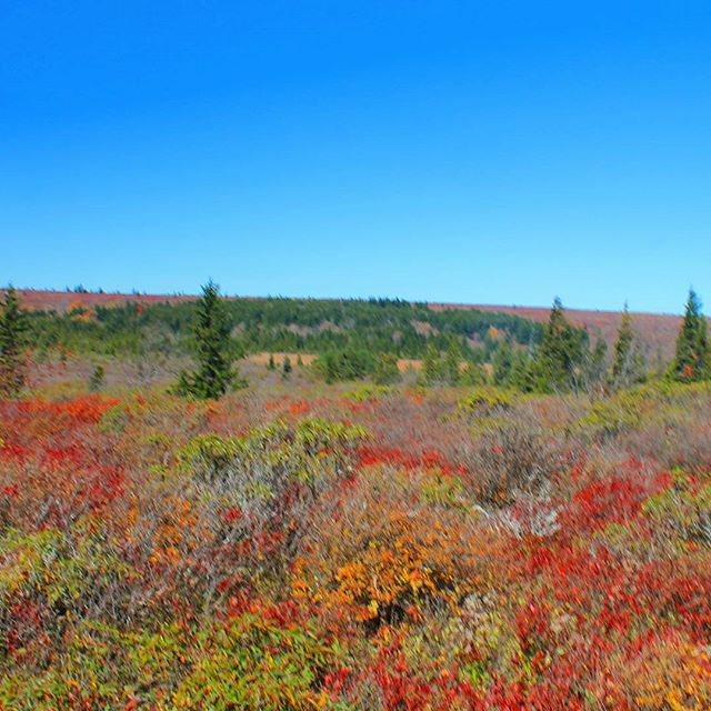 Photo: Much of Dolly Sods looks like this