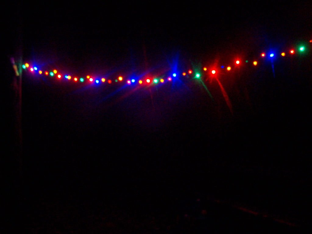 Photo: Christmas Lights in the Woods