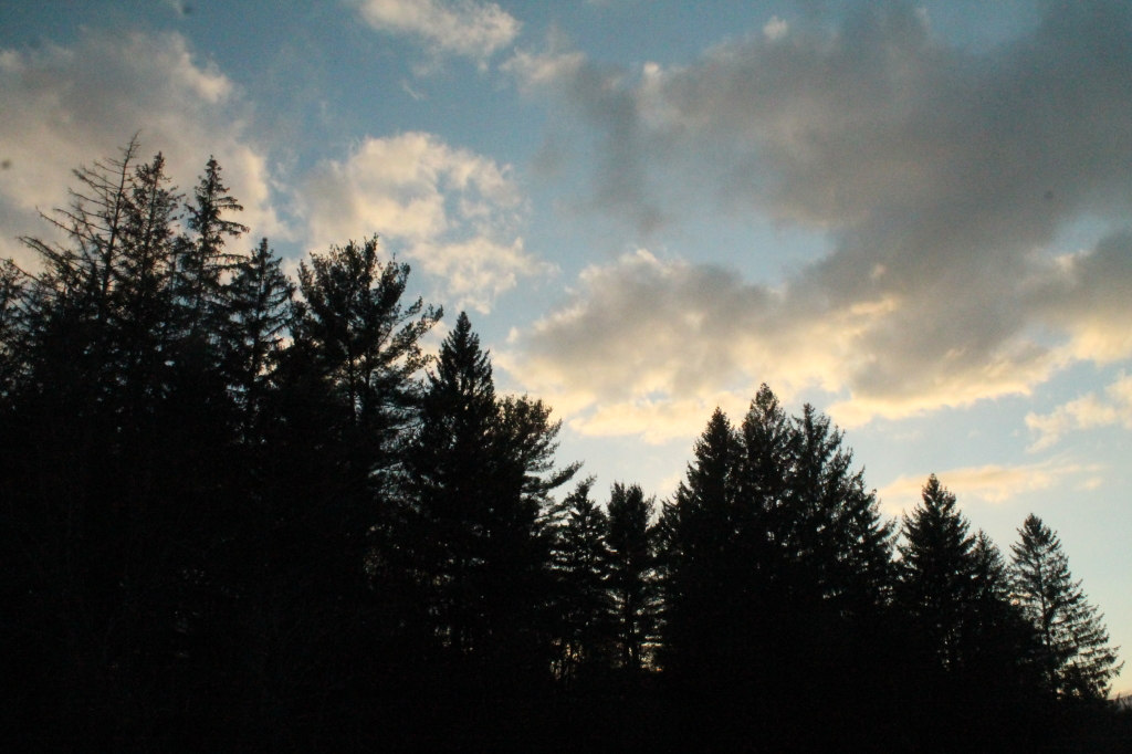 Photo: Clouds Over the Trees