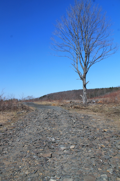 Photo: Tree Near Recently Logged Area