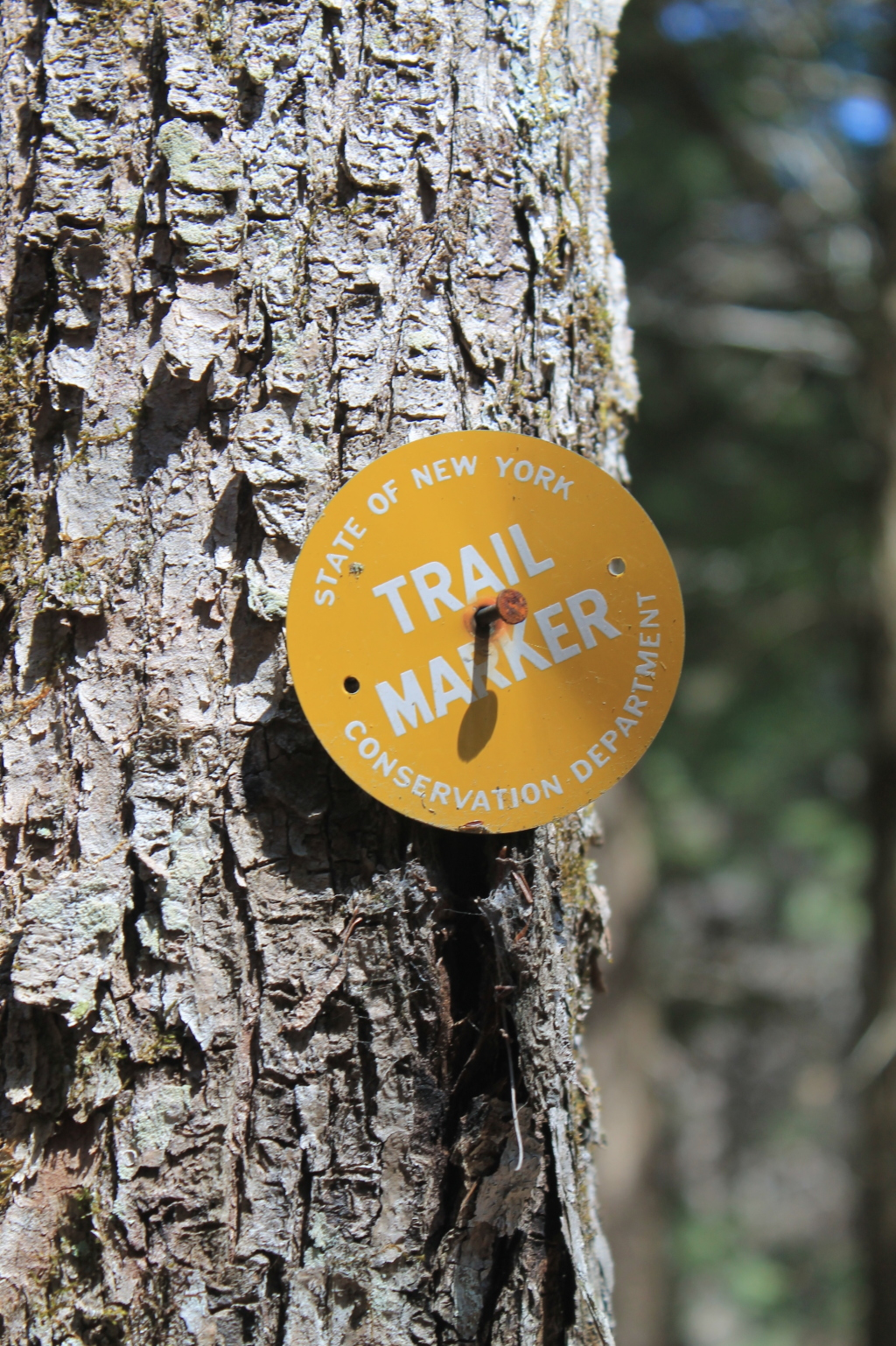 Photo: Conservation Department Marker