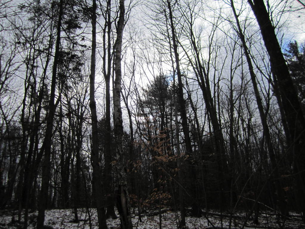 Photo: Along Firetower Road Trail