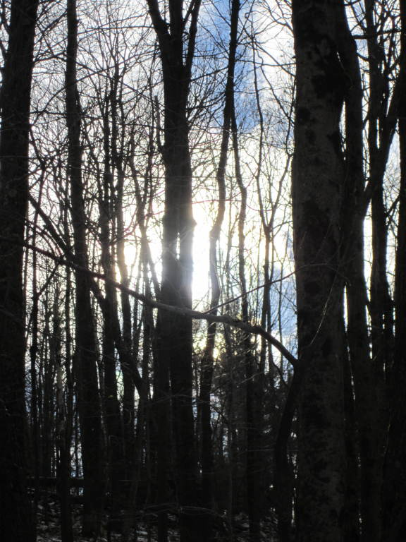 Photo: Sun Thru the Trees
