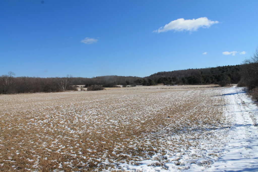 Photo: Snow Along Edge of Field