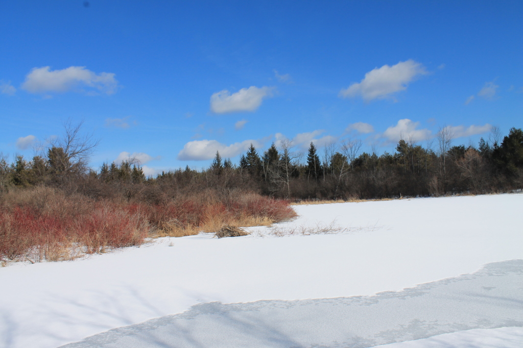 Photo: Frozen Pond