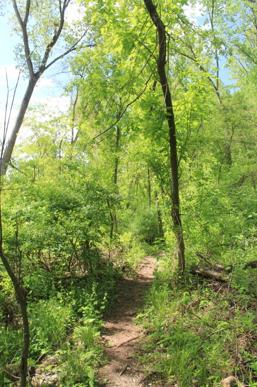 Photo: Trail Along Rivers Edge