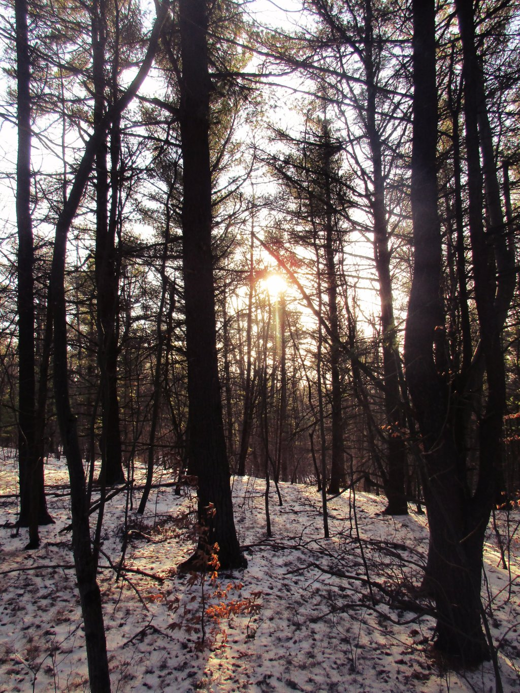 Photo: Sun Through The Woods