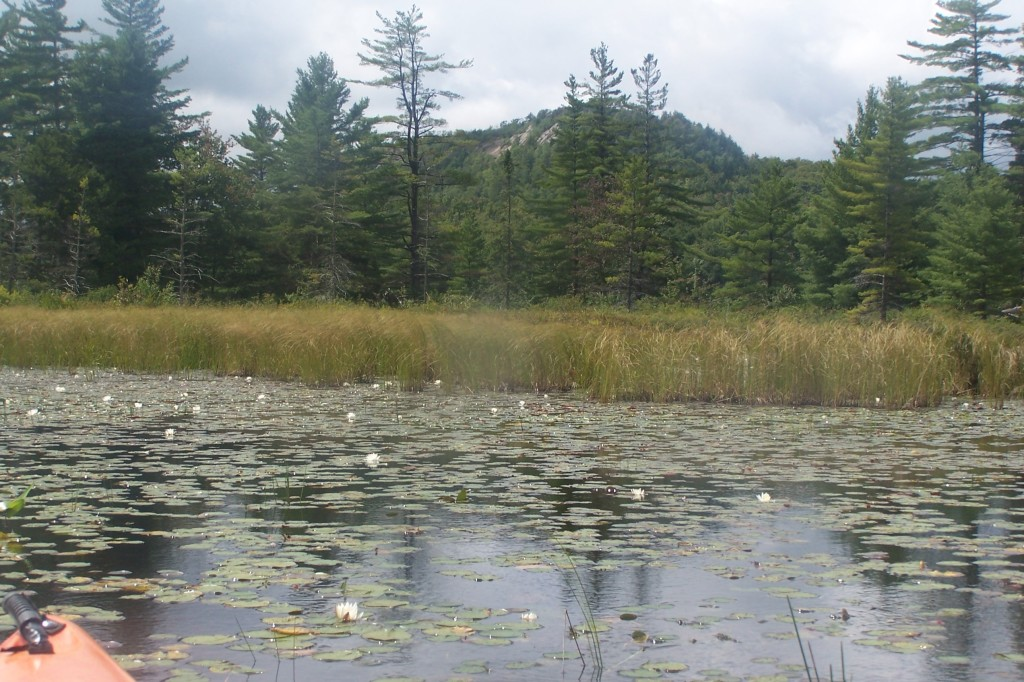 Natural Resources In The Adirondacks