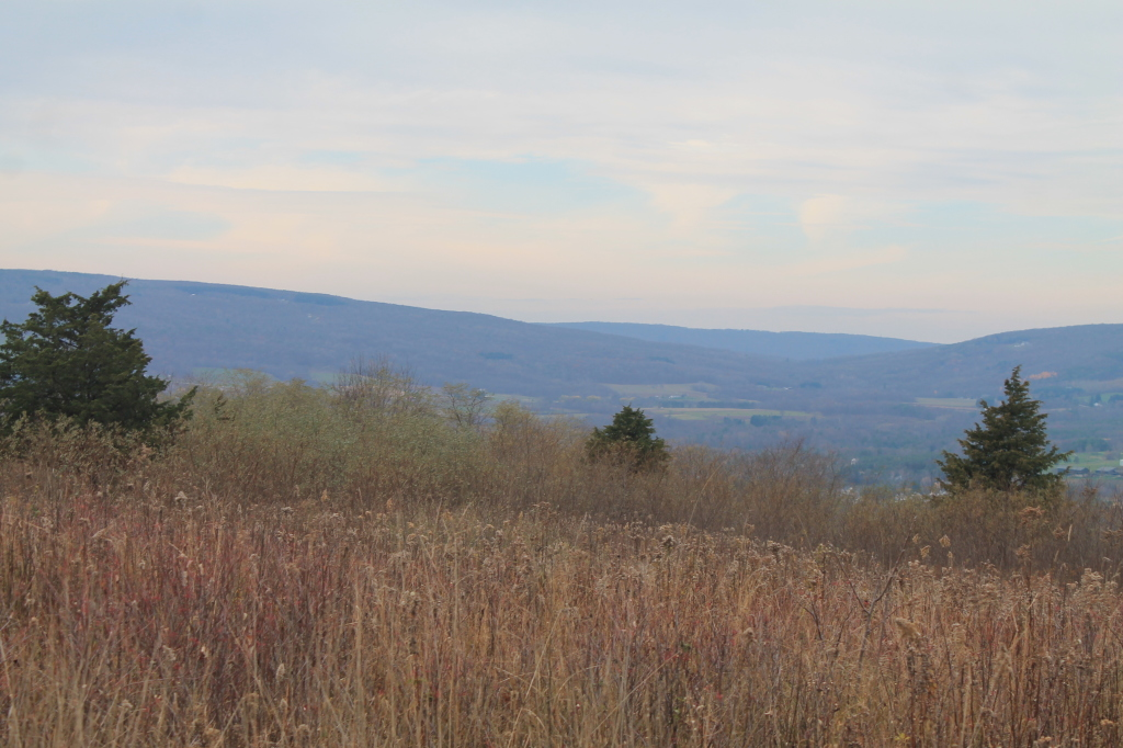 Photo: Across the Valley to Strid Hill