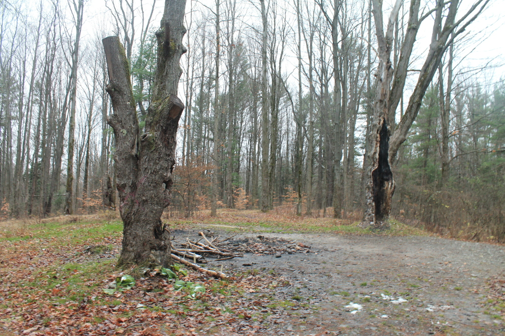 Photo: Cold Wet Morning at East Otto State Forest