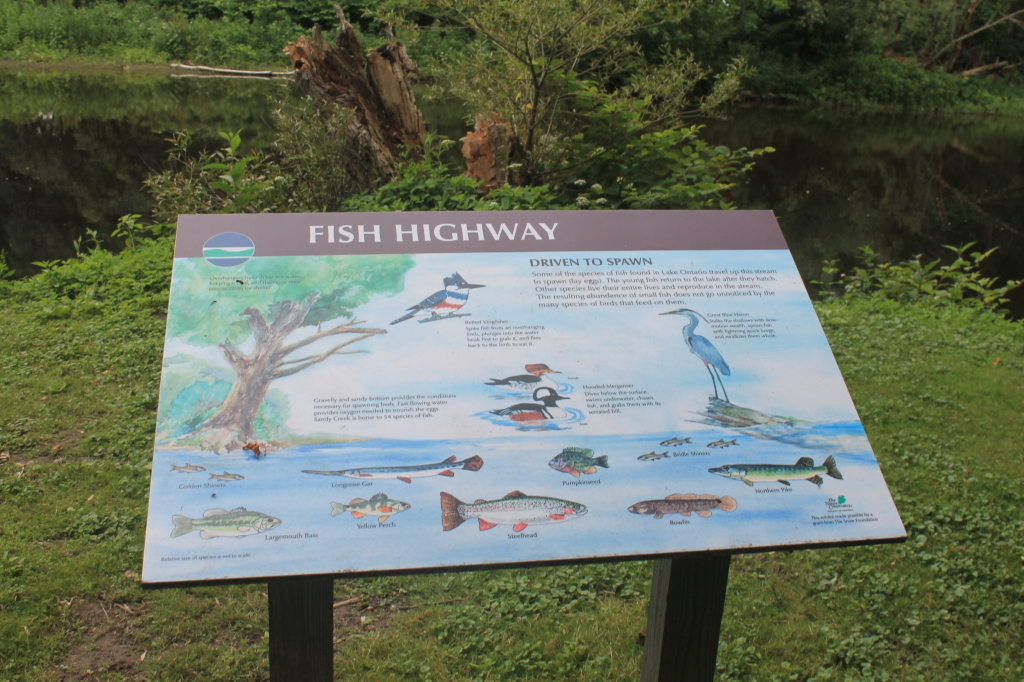 Photo: Fish Highway Sign