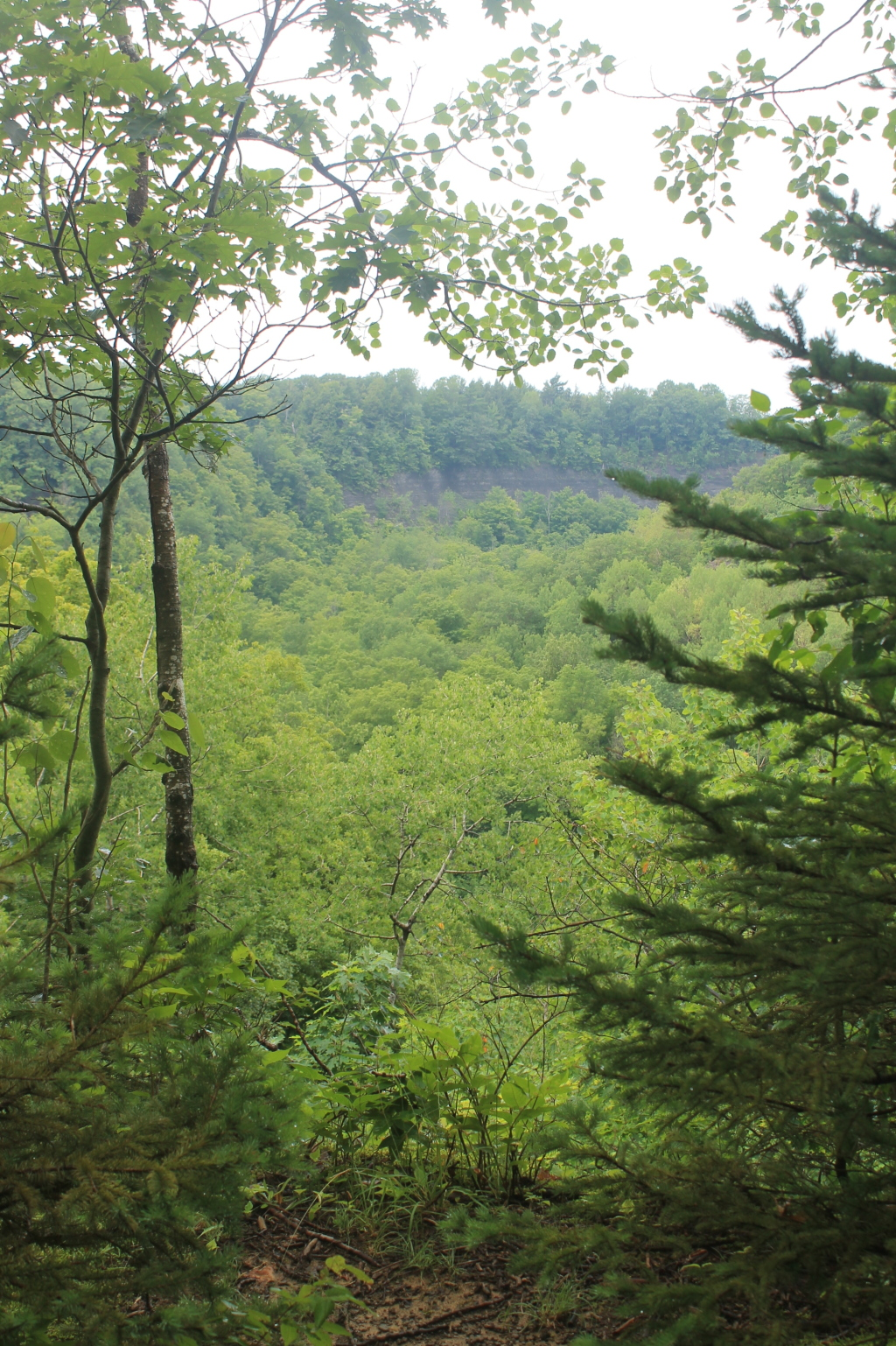 Photos: Tug Hill State Forest (Jul 2, 2013, Part A)