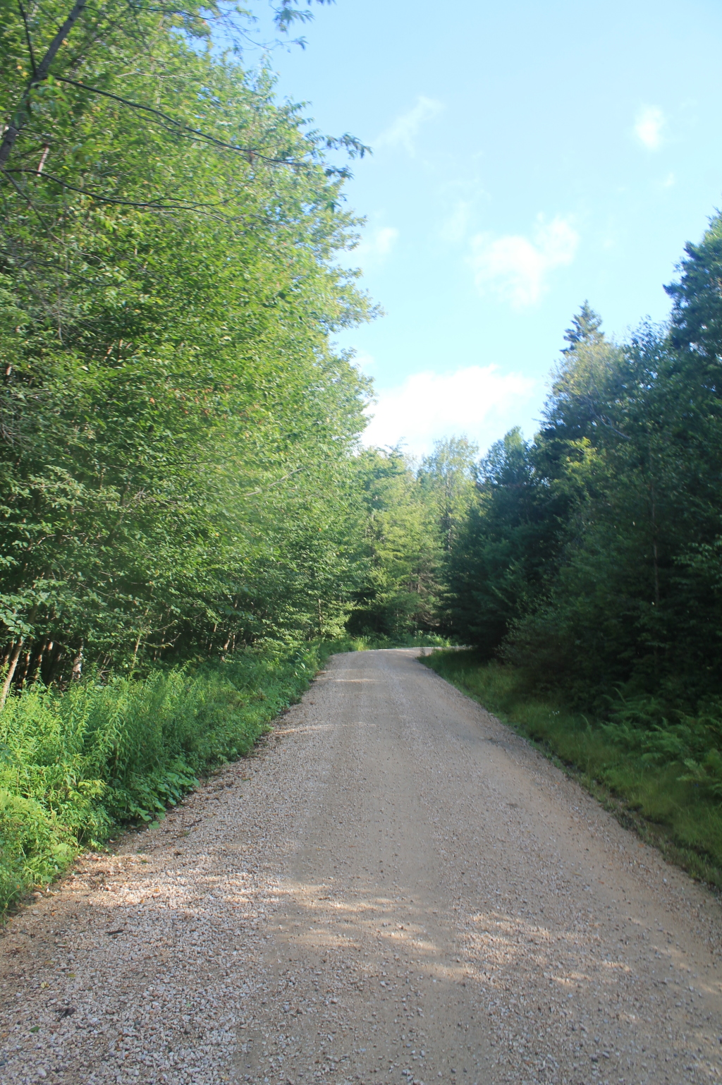 Photo: Forest Road 71