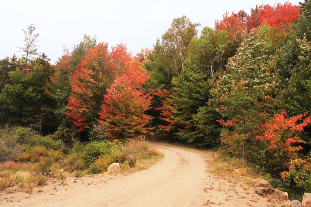 Photo: Indian Lake Road Near Falls Pond Outlet