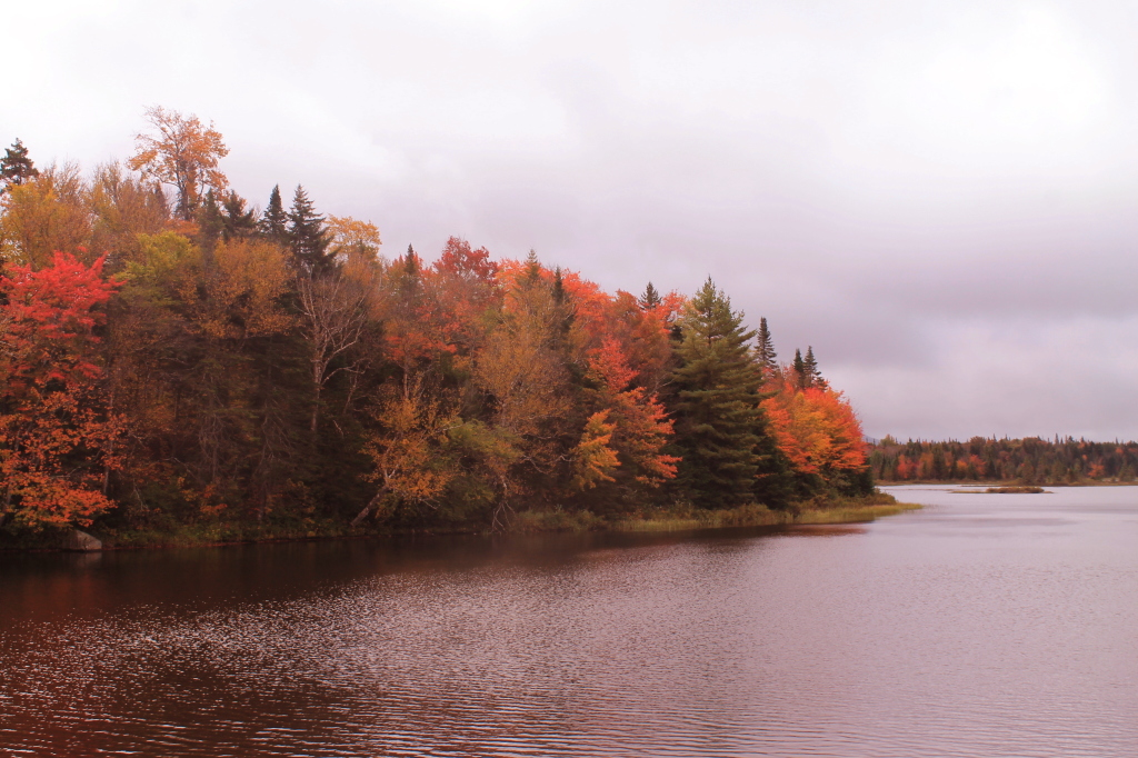 Photo: Trees Really Turning Color Along Cedar River Flow