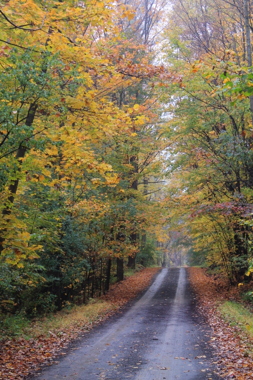 Photo: Texas Hollow Road 1