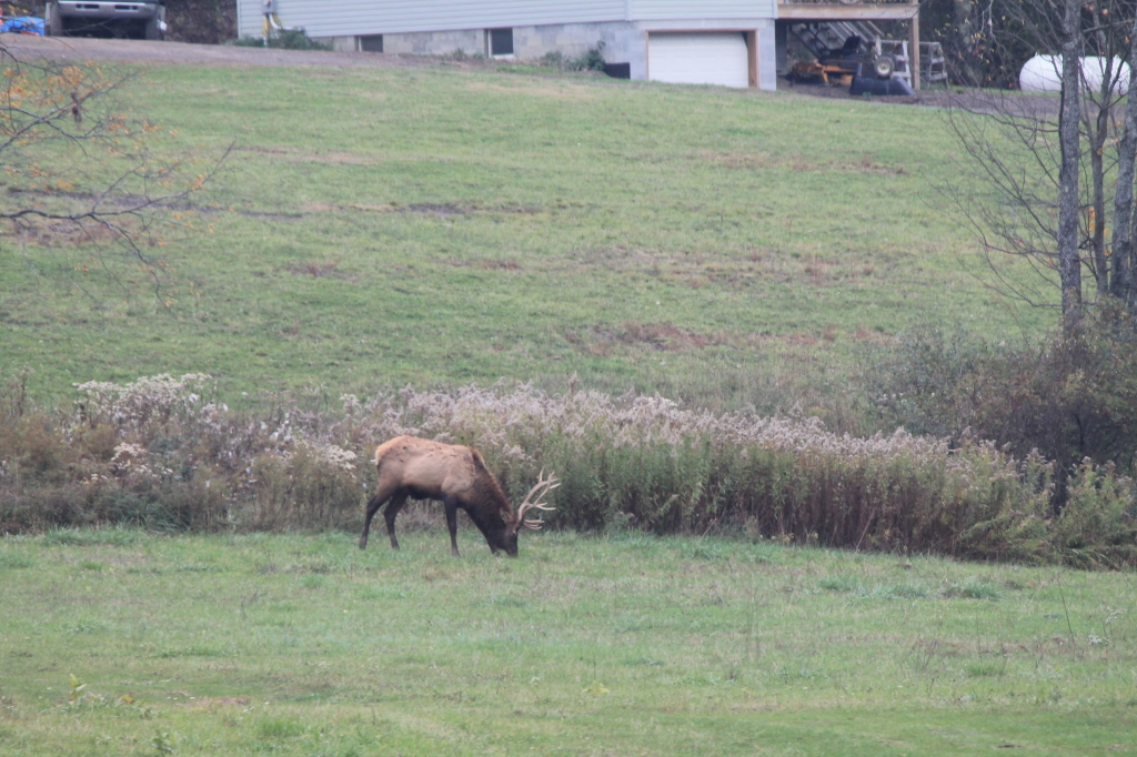 State Wildlife Action Plan Comments on Elk