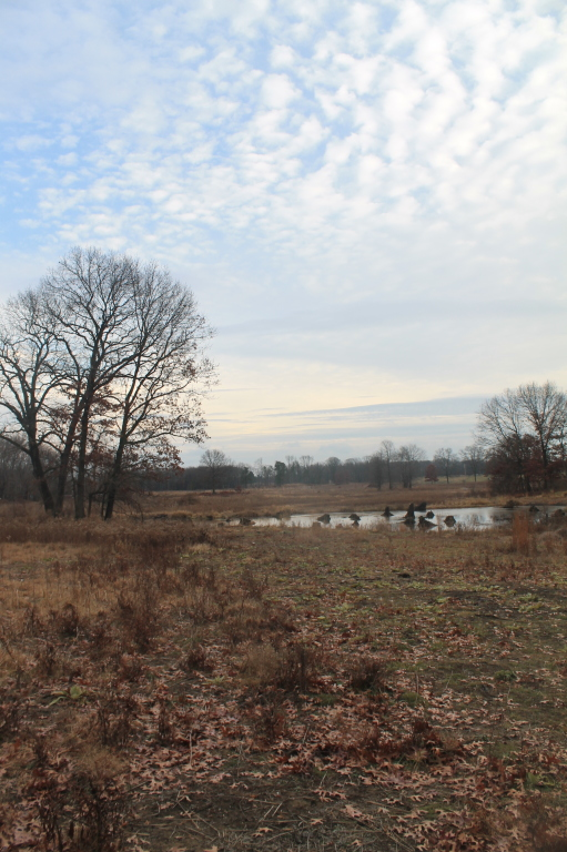 Photo: New Man-Made Pond in Restoration Area