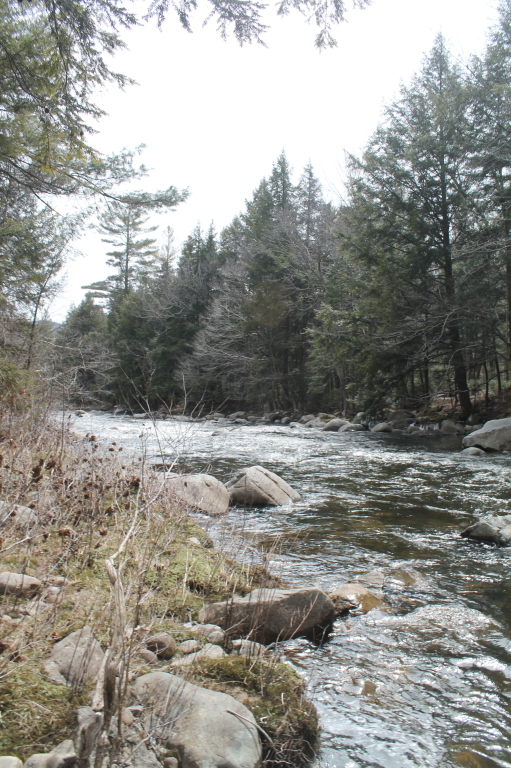 Photo: East Branch in the Clove