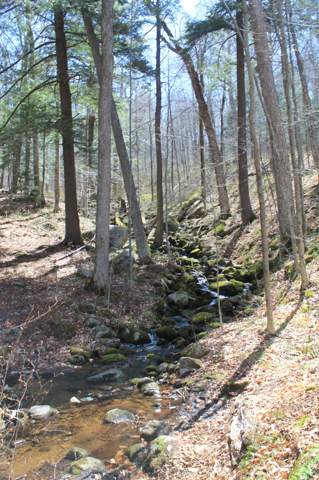 Photo: Unamed Brook on Kirby Pond Trail