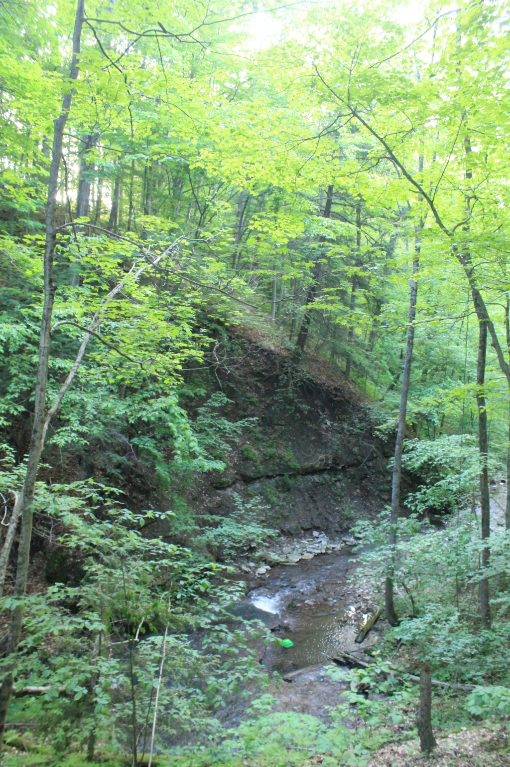 Photo: Canastota Creek Gorge from Railway