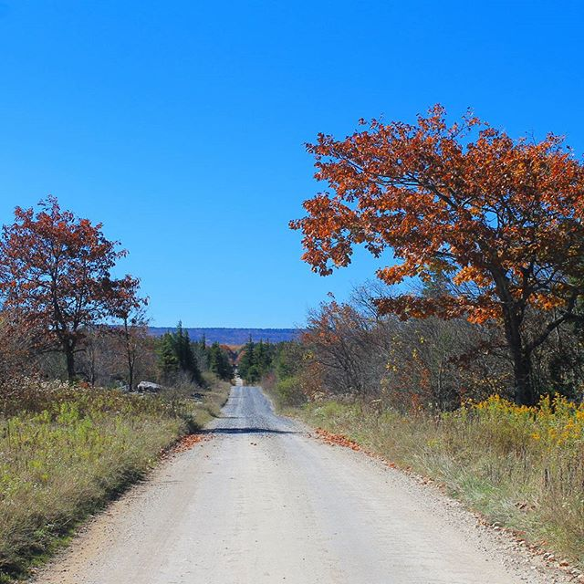 Photo: Dolly Sods Road