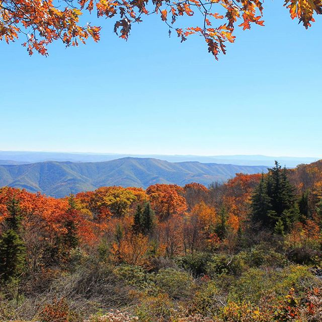 Photo: Fall at Dolly Sods
