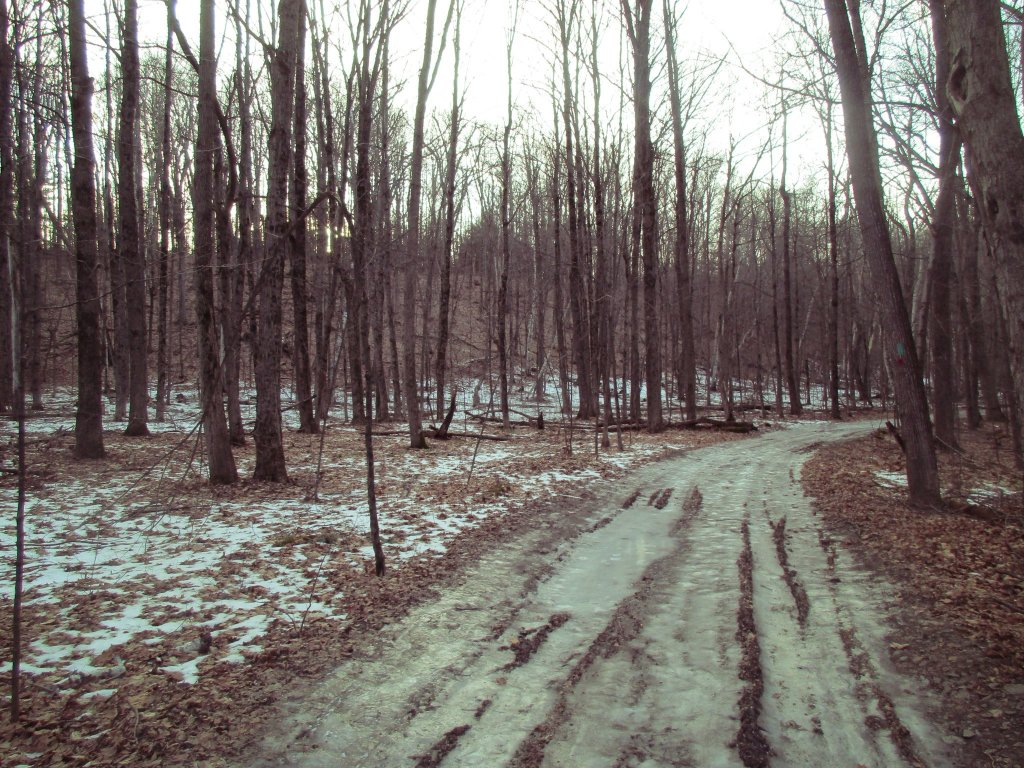 Photo: Trail Was Icy In Spots